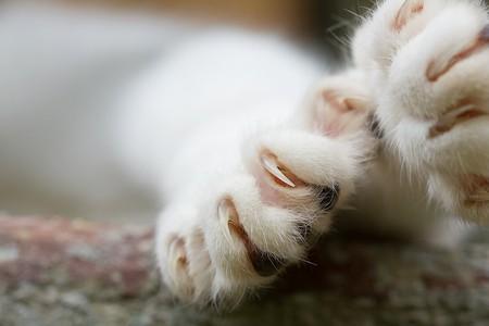 Kitten Supply List: Scratching Post